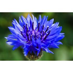 BRIGHT BLUE  -  анти -жълт шампоан